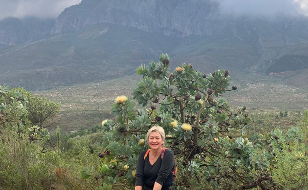 outdoors walking hiking jogging cycling nature jonkershoek nature reserve stellenbosch western cape healthy trails mountain proteas natural vegetation